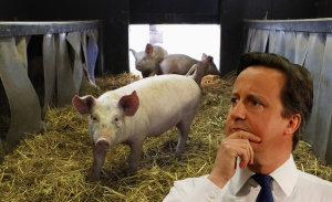 cameron with pig