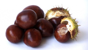 Conkers-Featured